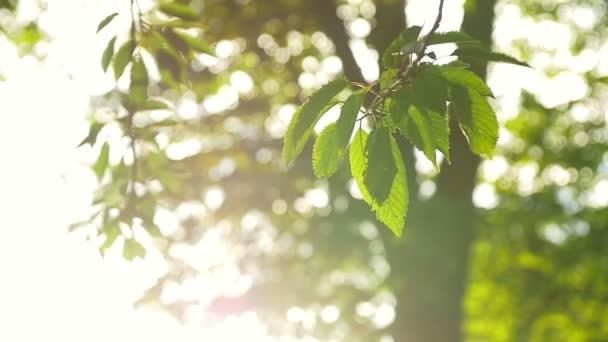 paprsky slunce skrze listy stromu