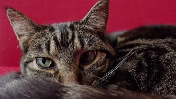 Kočka relaxační na červené pohovce