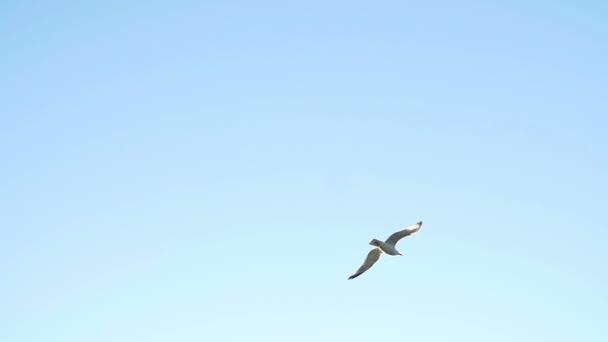 Vogelflüge am blauen Himmel