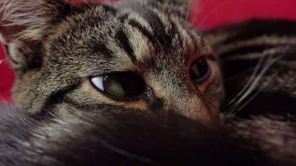 oholené kočky klipy mexická kočička porno zdarma