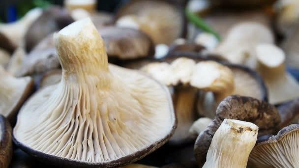 a piacon kapható gombát