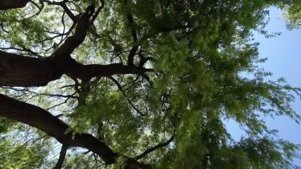 vítr iamong větve Vrba