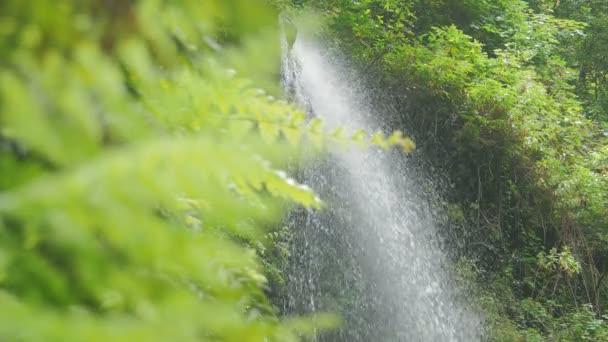 krásu vodopádů v lese svěží