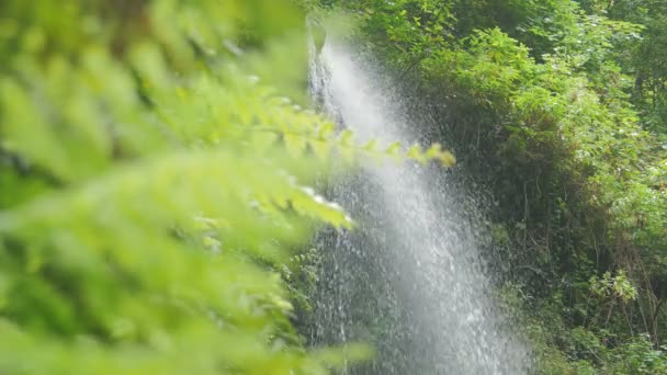 the beauty of waterfalls in a lush forest