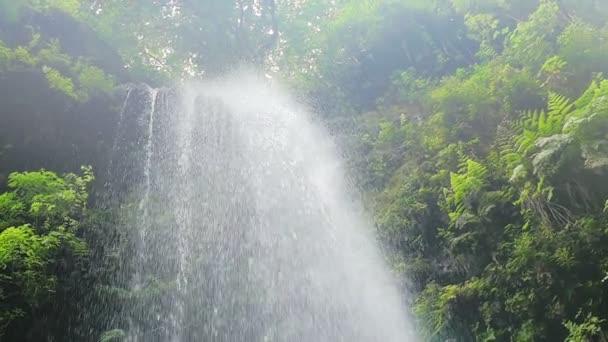 Voda tekoucí přes živé rainfores