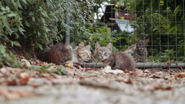 zatoulané kočky odpočívá