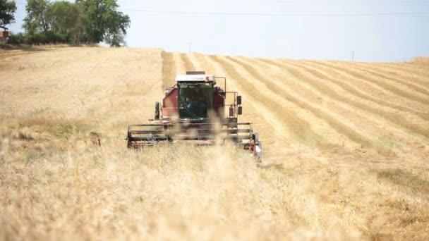 Farmář pracuje s sklizeň v vlnité pšeničné pole