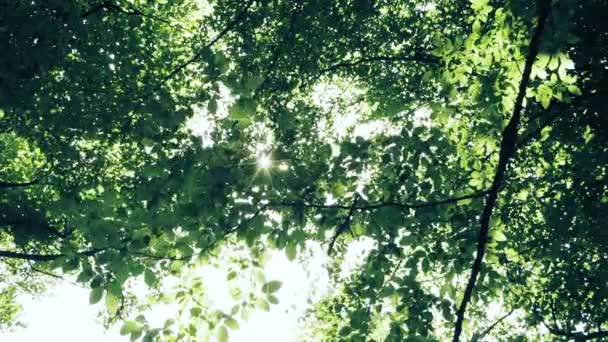 Sun shining through the branches and leaves