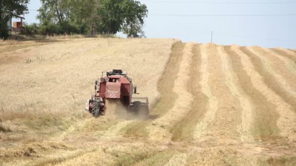 farmář v práci s moderní kombinovat v vlnité podán: sklizeň pšenice