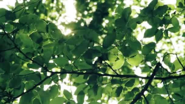 Nap süt át az ágak és levelek az erdő fái