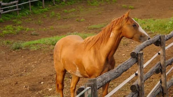 horse starts running