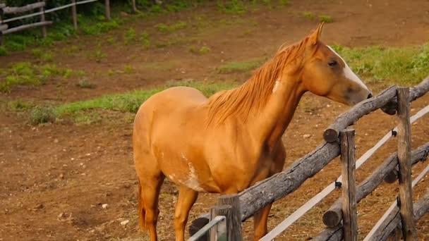 kůň začne běh a tryskem uvnitř farma