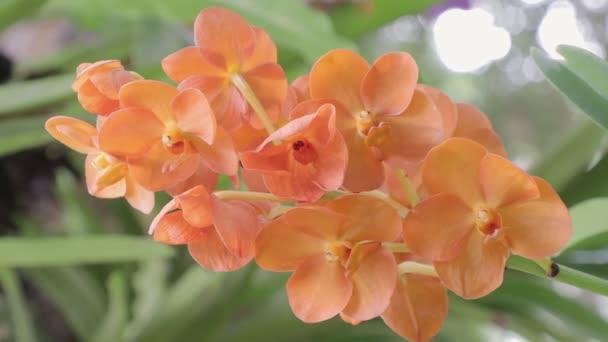 Orchideenblume im Orchideengarten am Winter- oder Frühlingstag. Vanda Orchidee