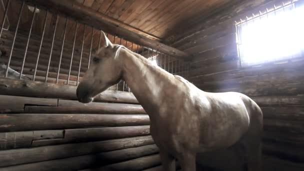 Mädchen kümmert sich um Pferd im Stall