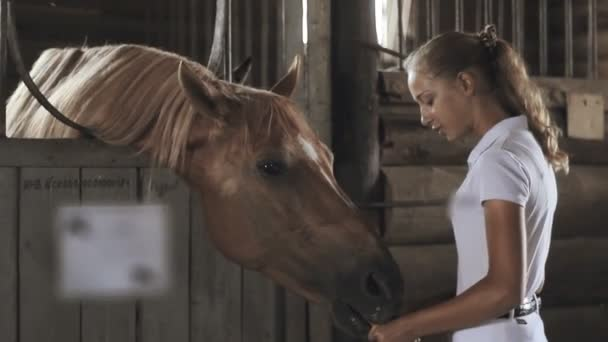 Girl takes care of the horse in the stable