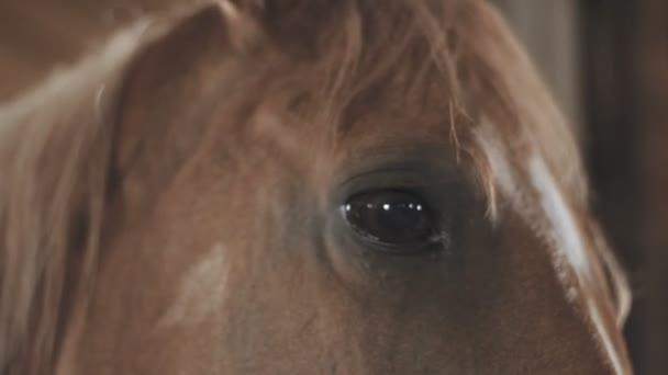 das Pferd im Stall vor der Ankunft