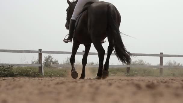 ló futott a homokban