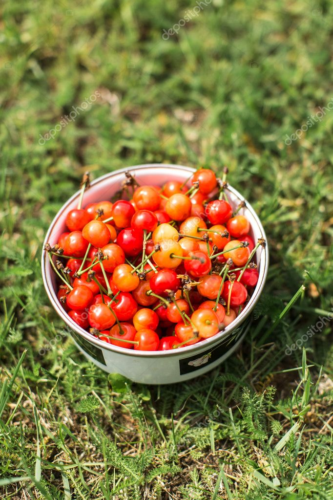 bowl of cherries on green grass