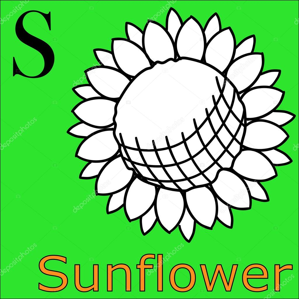 S letter. Vector alphabet. Coloring book sunflower — Stock Vector ...