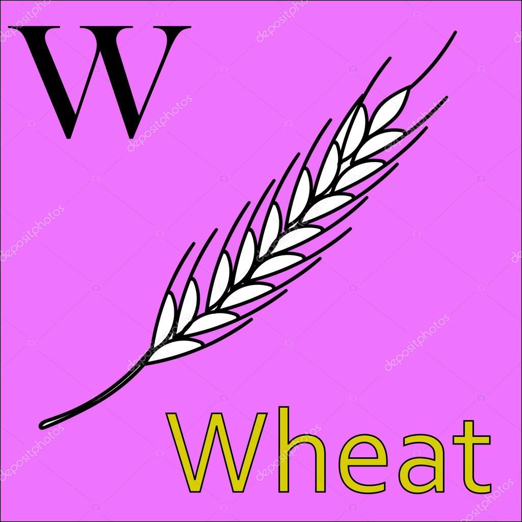 W Harfi Vektör Alfabe Boyama Kitabı Buğday Stok Vektör