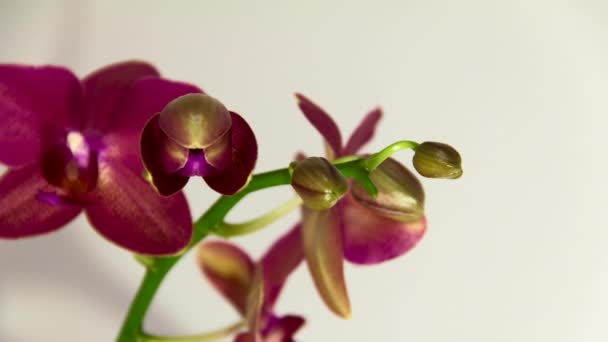 Orchidea bloom idő telik el