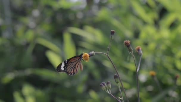 Sklizeň butterfly v lese