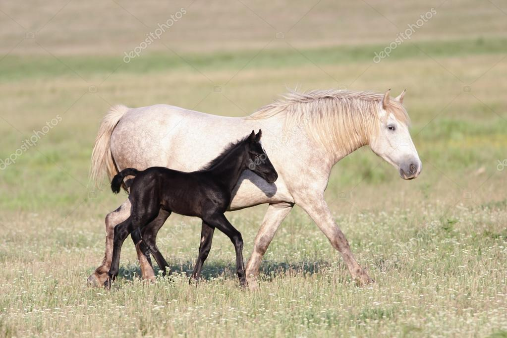Iki At Siyah Beyaz Ve Yavru Anne Stok Foto Gezafarkas 103583308