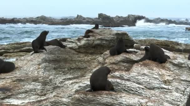 seals rest on the rocks
