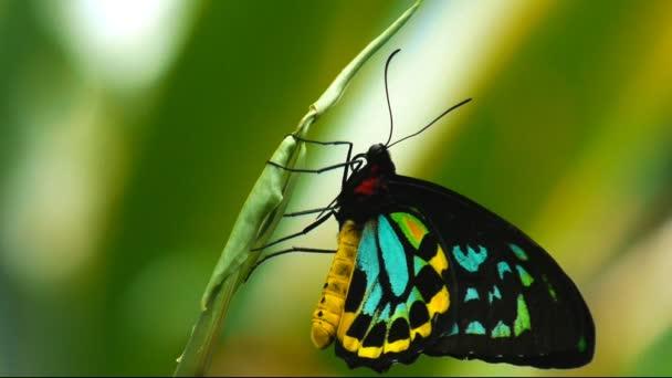Motýl se opírá o list