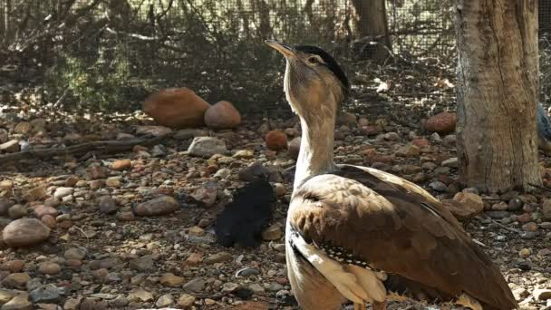 Video z velkého ptáka