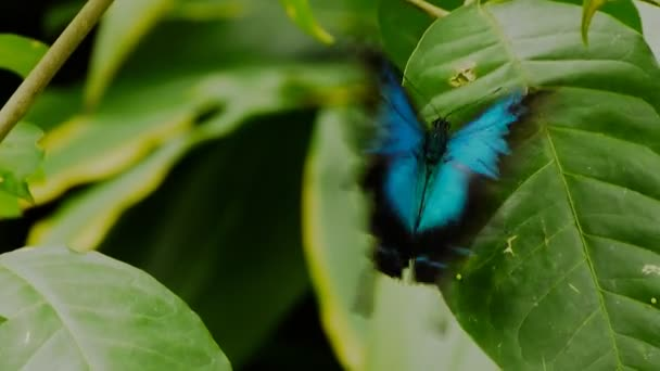 butterfly lays eggs