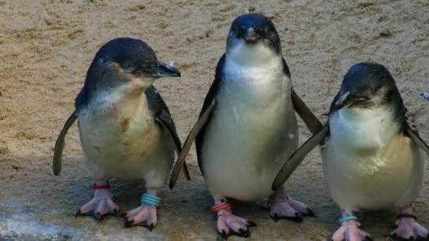 penguins standing on a beach