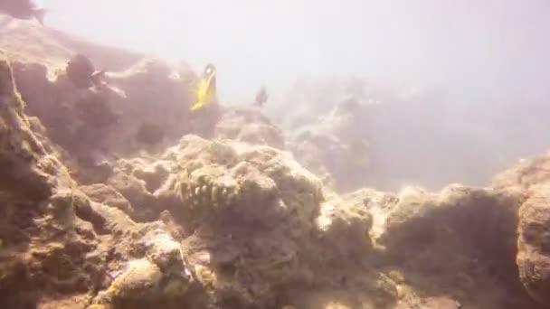 pillangó halak: hanauma bay