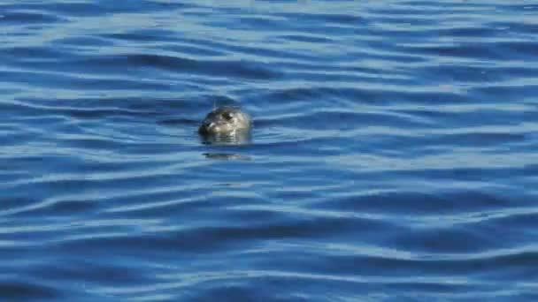 seal surfacing for a breath