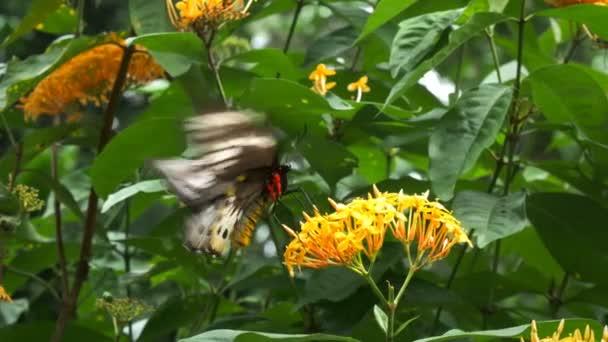 pillangó virág