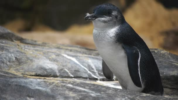 pingvin nyugszik a párkányon a rock