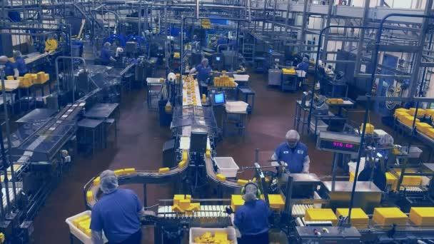 dělníci v továrně sýr tillamook