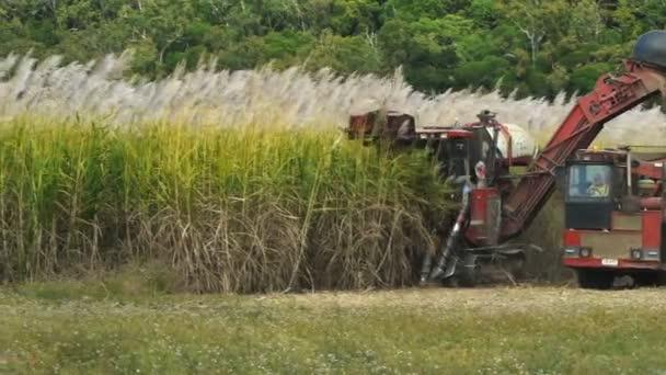cukornád Aratógép betakarítás cukornád