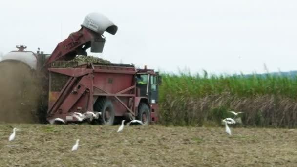a cukornád Aratógép vágott nád
