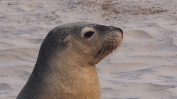 young sea-lion on beach
