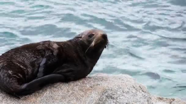Seal pup spočívá na skalách