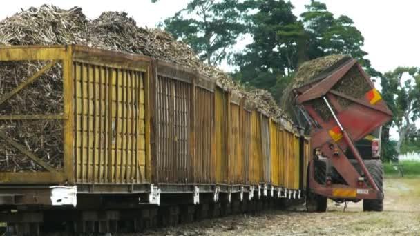 cukornád teherautó kiüríti egy teher-ból cukornád
