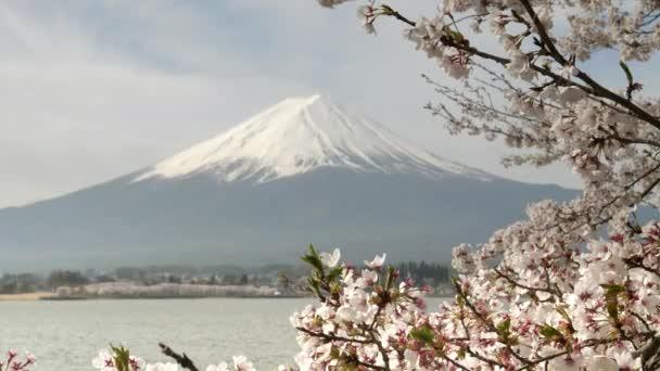 zblízka pohled na třešňové květy a mt fuji u jezera kawaguchi v Japonsku