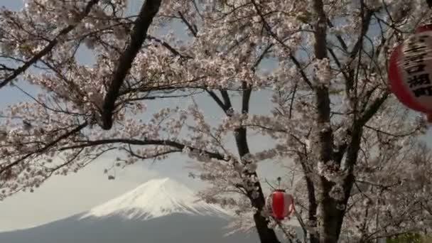 zblízka gimbal záběr mt fuji a třešeň s papírovou lucernou u jezera kawaguchi