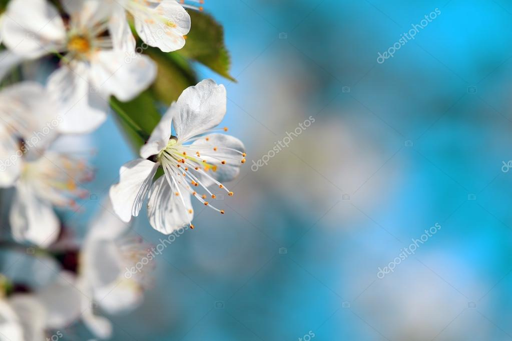 Flower on a turquoise background