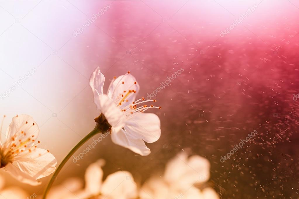 Cherry blossom against a red background