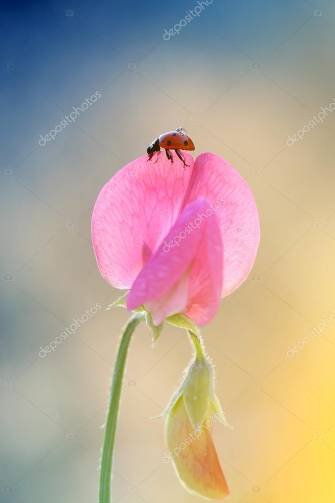 The new fragrance ladybugs