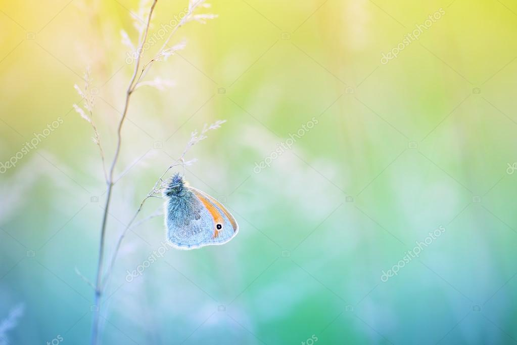 Butterfly fond of silence