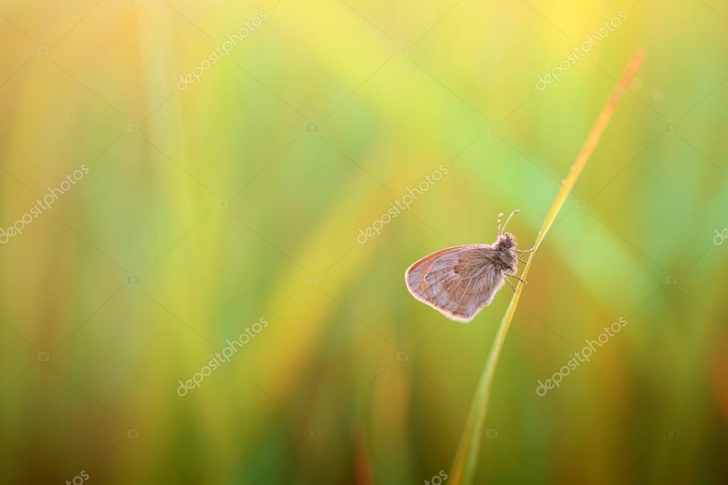 Butterfly fond of silence