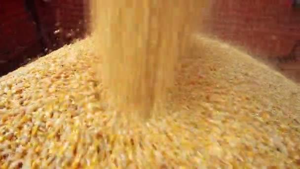 Kombinovat zrna kukuřice kombajn vyloženo v kamionu